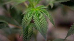 Marijuana médicale: feu vert au vaporisateur en