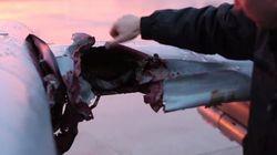 Un pilote de chasse frôle la mort à cause d'un oiseau
