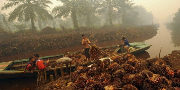 A worker unloads palm fruit at a palm oil plantation in Peat Jaya, Jambi province on the Indonesian island...