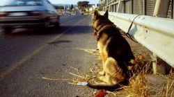 Voyez la réaction de ce chien caressé pour la première