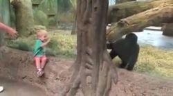 Cet enfant et ce gorille jouent à cachette
