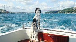 Ces chiens ne veulent vraiment pas que l'été se termine