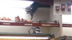 Toronto: Ce raton laveur futé réussit à voler un