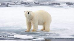 Douceur anormale sur l'Arctique