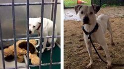 La photo de ce chien abandonné avec sa peluche l'a peut-être