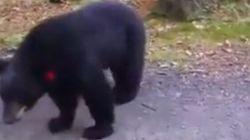 Elle se retrouve nez à nez avec des ours noirs pendant sa randonnée