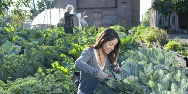 Women Working in Urban Organic Community Garden