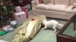 Ces chiens sont vraiment trop excités d'avoir reçu un cadeau à Noël