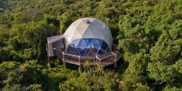 Perdez-vous dans la jungle africaine depuis le confort de ces suites surélevées