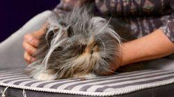 Le Chatlon: un tout premier salon du chat à Montréal