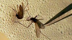 Cas humain de virus du Nil occidental à