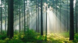 Réchauffement climatique: les forêts boréales
