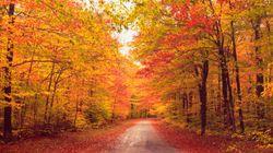 Obsédé par l'automne? Il y a une explication scientifique à