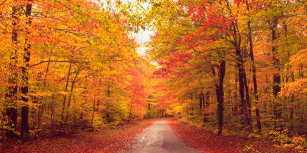 Autumn trees over dirt path in