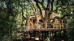 Cette cabane dans les arbres de luxe va vous faire