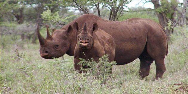 Élections fédérales 2015: Parti rhinocéros : utopies, prises de conscience et dérapages