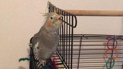 Cet oiseau a tout compris au karaoké