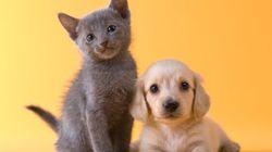 Cinq accessoires essentiels pour votre animal de