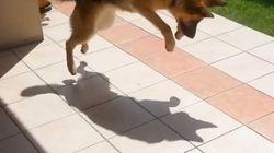 Amusant: des ombres et des chiens!