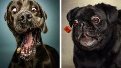 Les expressions faciales de ces chiens qui attrapent leur friandise sont hilarantes