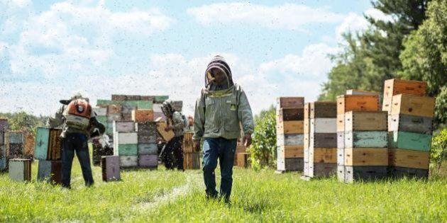 «La classe ouvrière»: faire du miel autrement au pied de la montagne du