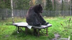Cet ours peint des oeuvres pour une bonne cause