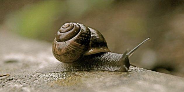 La reproduction des escargots est