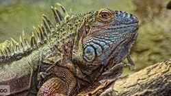 Un spectacle de reptiles coûte cher à un