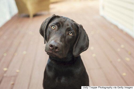 Un chien appelé Trigger presse sur la gâchette et atteint le pied de sa