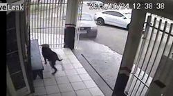 Ce chien échappe de justesse à la mort