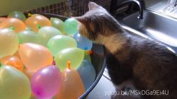 Ces chiens et chats qui crèvent des ballons vont vous amuser