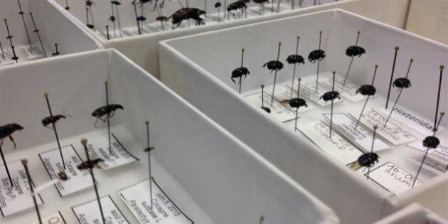 Recherche concluante pour l'utilité des insectes dans la résolution de