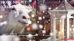 Des chèvres chantent Noël