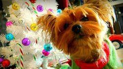 Des chandails de Noël laids pour animaux