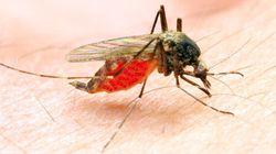Zika peut aussi atteindre la moelle