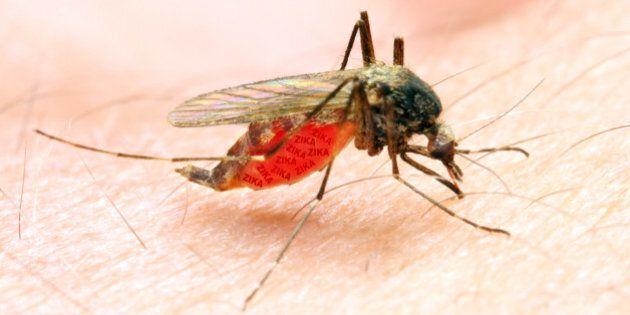 Zika peut aussi atteindre la moelle épinière et provoquer une