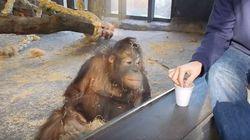 Cet orang-outan vous fera croire à la