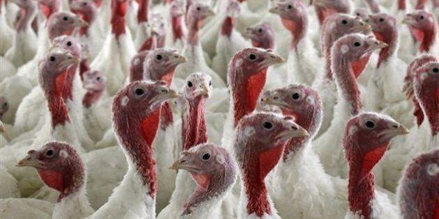 Cas de grippe aviaire dans une ferme du sud de