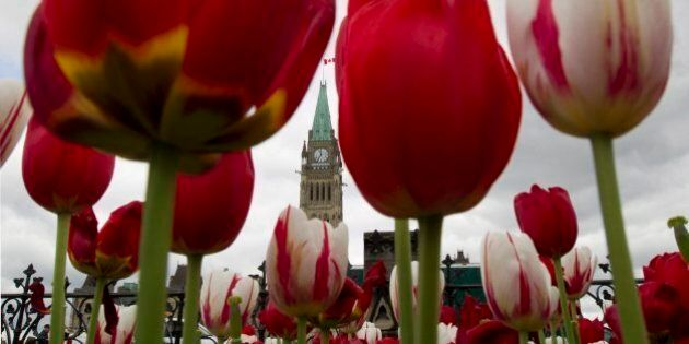 The Peace Tower is framed by tulips on Parliament Hill in Ottawa Thursday May 17, 2012. (AP Photo/The...