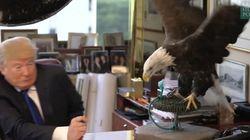 Quand Donald Trump se fait «attaquer» par un aigle
