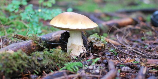Most of the mushrooms we found were old and soggy. But this one was still