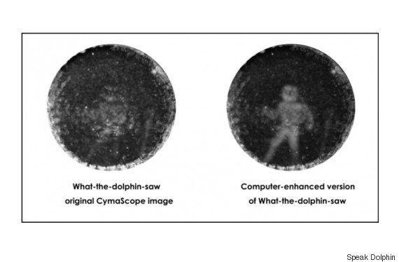 On sait enfin comment un dauphin nous voit