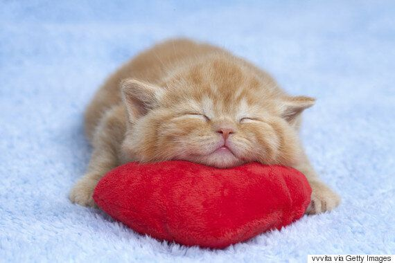 Avoir un chat rend plus heureux et en meilleure santé, voici