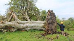 Un arbre déraciné par une tempête révèle un grave secret vieux d'un