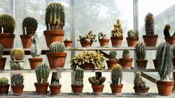 Ces plantes d'intérieur sont pratiquement
