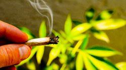 Possible de faire pousser sa propre marijuana thérapeutique