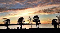 Les palmiers de Vancouver vous donneront envie de vous ruer vers