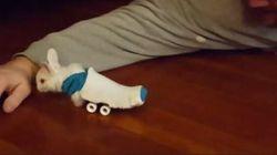 Ce lapin paralysé a trouvé une utilité aux mini-skateboards