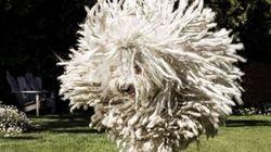 Le chien de Zuckerberg ressemble à une serpillière volante