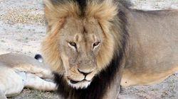Chasse au lion: des forfaits offerts au Québec